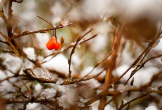 snow-nature-bush-winter